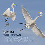 Sigma with Roman: A Paradigm Shift in Bird Photography (Sigma)