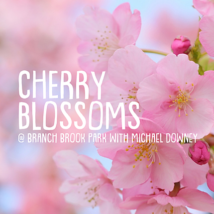 Cherry Blossoms at Branch Brook Park with Michael Downey