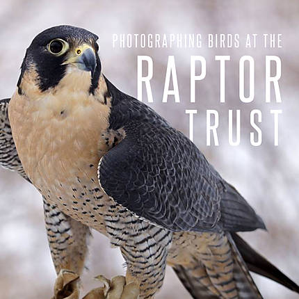 Photographing Birds at The Raptor Trust